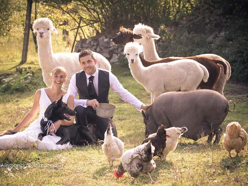 sposi alpaca